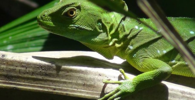 Experience the Biodiveristy of Costa Rica