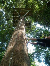 Zipline canopy tree trek - Bocas del Toro