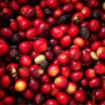 Coffee farms in Boquete