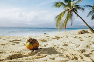 Caribbean beach with coconut