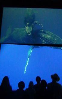 Wonders of the underworld video Biomusem - Panama City