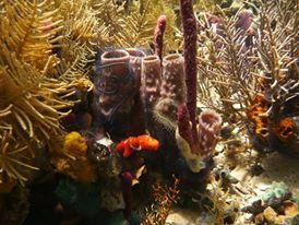 Experience the marine biodiversity of Bocas del Toro