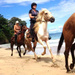 People riding horses on the beach