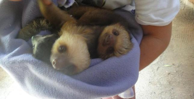 Lazy bear love