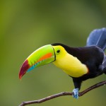 Tucan sitting on a branch