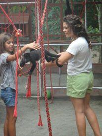 Monkeys playing in Jaguar Animal Rescue Center - La Ceiba - Puerto Viejo