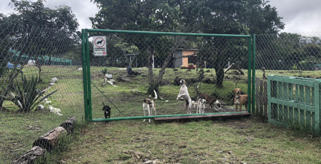 DOG RESCUE CAMP