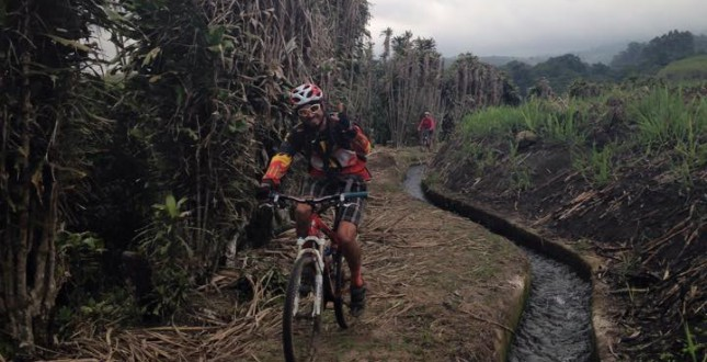 Mountain biking in sugarcane fields