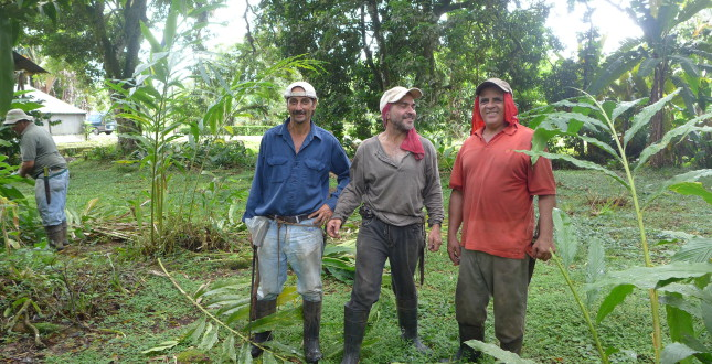 Volunteering in Tropical Agriculture