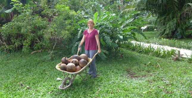 Volunteer Work in Botanical Garden